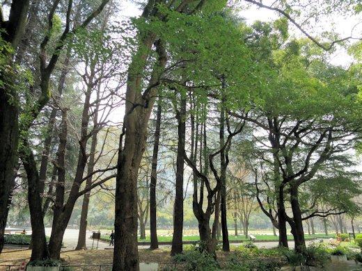 日比谷公園・緑